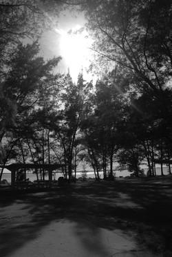 bwtrees.jpg