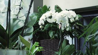Communiqué de presse & invitation:  Brussels Flowers et le restaurant Chez Léon mettent les main