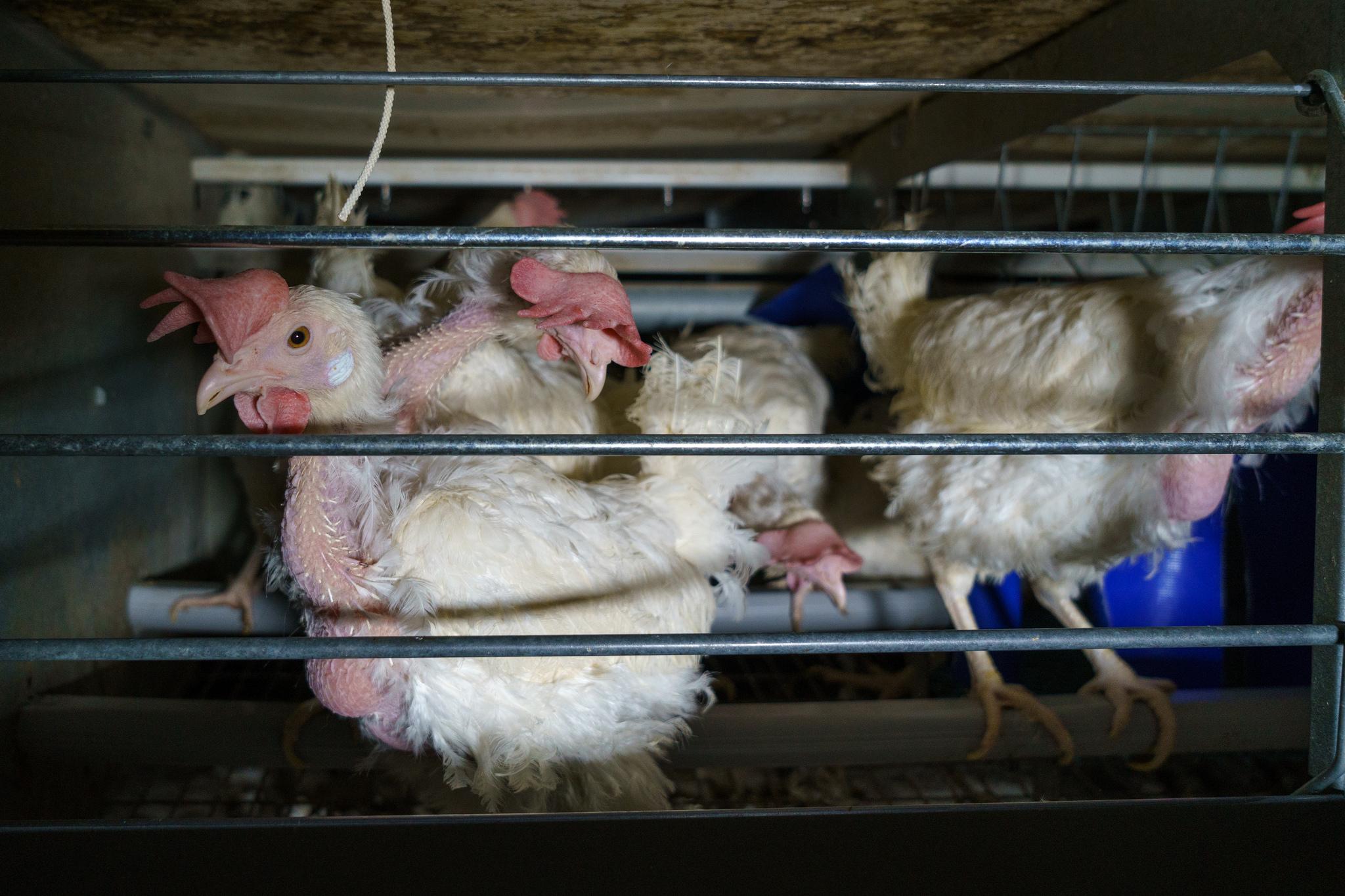 Photo: Oikeutta eläimille