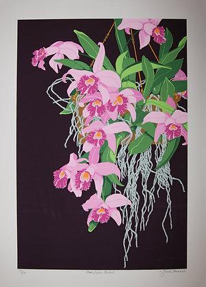 Pink Laelia Orchid, 1981 (Print)