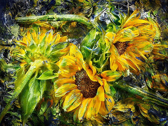 Painted Sunflowers: (Frameless Frame)