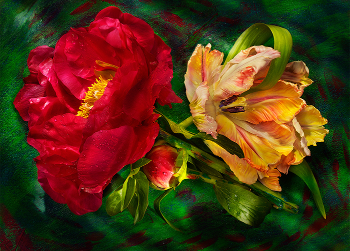 Peony and Parrot Griffn