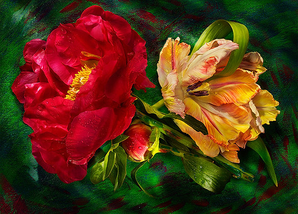 """Peony and Parrot""(Frameless Frame)"