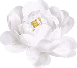 White Rose2.png