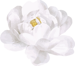 White Rose2.png