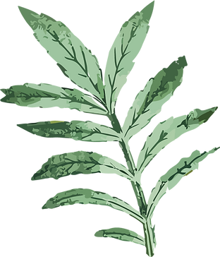 Green Leaves.png