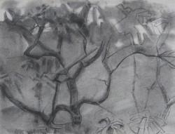 Mt Gretna bush (2020)
