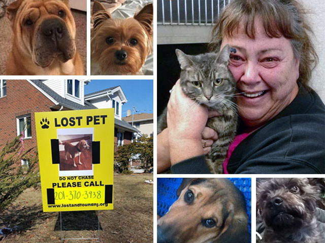 Lost and Found Pets of North Jersey by NJ STRAYS can help you find your lost or missing pet!