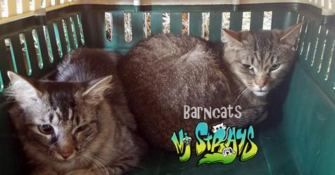 3 Benefits of Barncats
