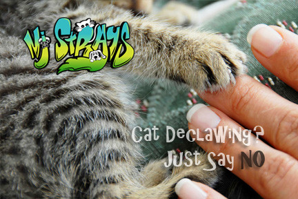 Declawing a Cat? Read This First
