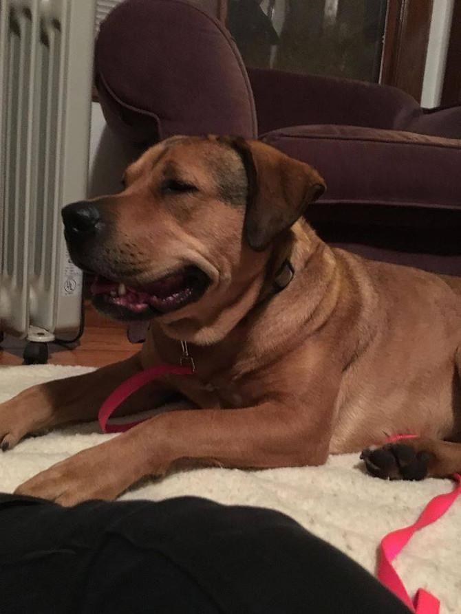 Zina's Harrowing Rescue Story