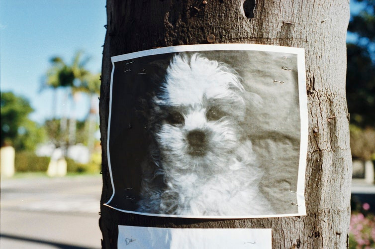Don't chase lost pets. They might run away. Find out how to capture a lost and scared animal.