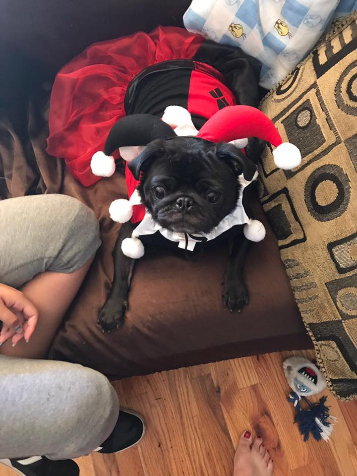 Adorable dog in cute Halloween costume