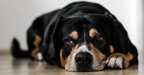 There are easy ways to tell if your pet is in pain.