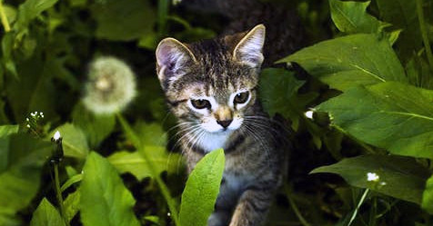 Be on the lookout for plants your dog or cat shouldn't eat outside.