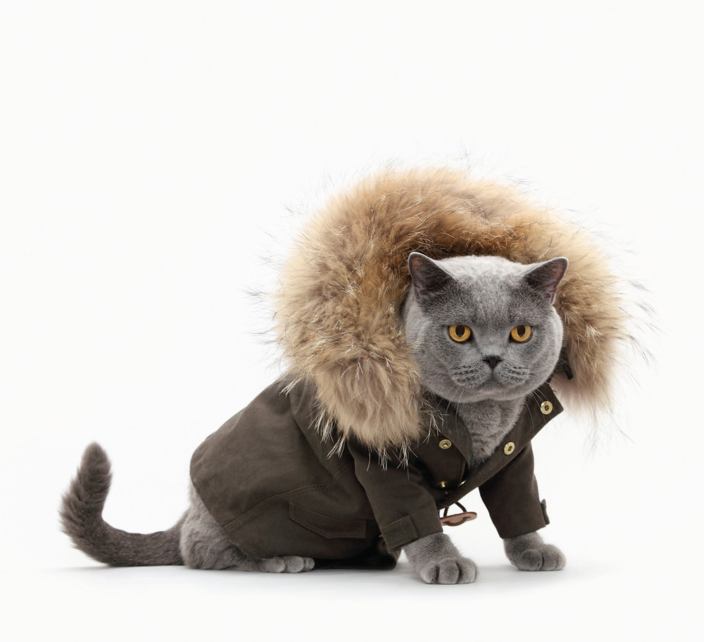 Keep your dogs and cats warm in the winter.