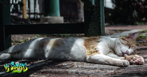 Can my pet get sick from the heat? Yes!