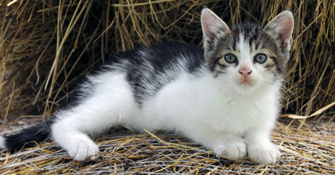 NJ Strays Founder Spreads Barncat Awareness
