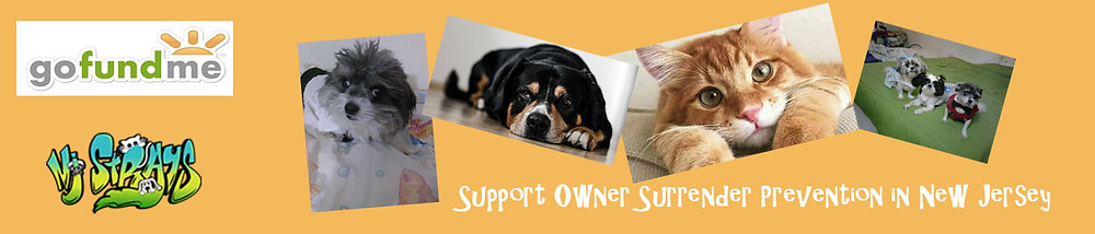 Support pet owners in need with a tax-deductible donation to OSPP!