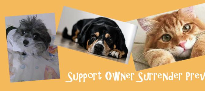 Interview: Owner Surrender Prevention