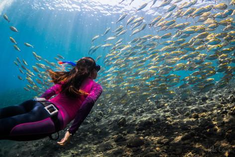 Wall of fish