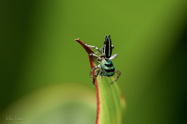 ColorChalleng-green_spider.jpg