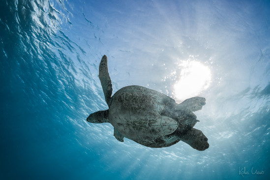 Turtle Down Under