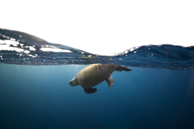 Breath of a Turtle