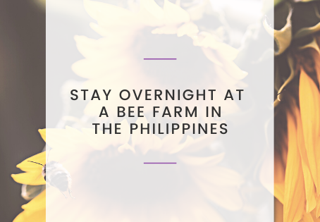 Stay Overnight at a Bee Farm in the Philippines