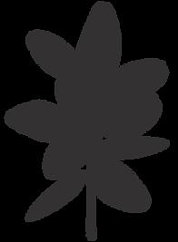 micronutrition-naturopathie-natacha-bellec-alimentation-médecine-naturopathe-naturopathie-Gironde-bassin-Arcachon-bordeaux-La-teste-Gujan-mestras-Cazaux-Biscarosse-Salles-Biganos-Arès-Le-Teich