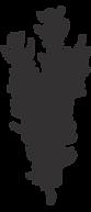 santé de la femme nutrithérapie sophie croiger boulogne billancourt
