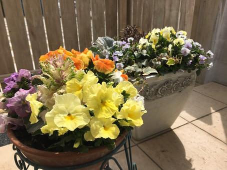待ちわびた春、いよいよ春