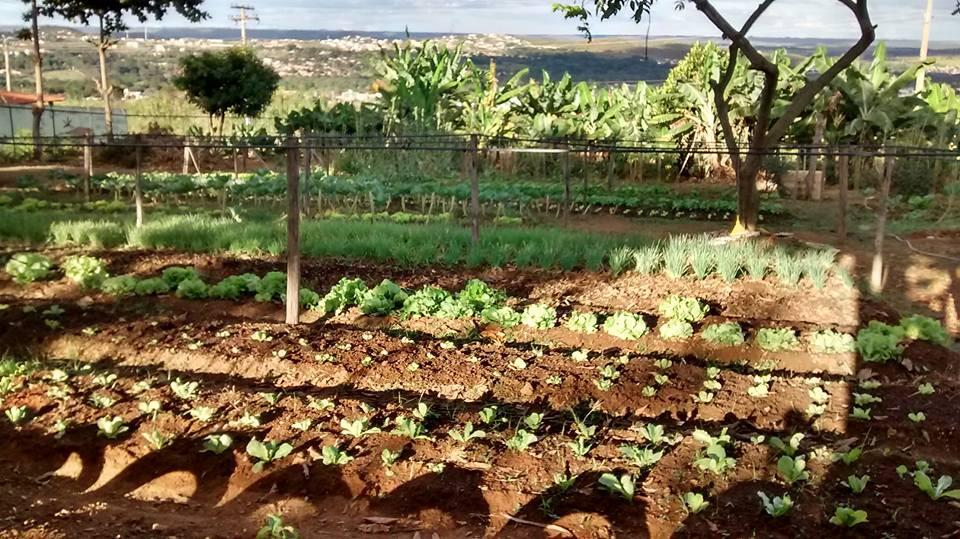Horta comunitária Girassol em São Sebastião