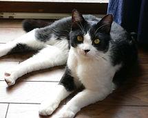 ペットシッター、キャットシッター、東京、墨田、留守番、お世話、猫