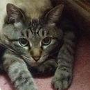 キャットシッター、ペットシッター、東京、墨田、留守番、お世話、猫