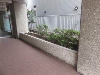 ビルのエントランス植栽工事