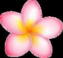 tropical-flowerpng.png