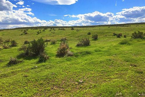003-432-02 / 10.00 Acres in Eureka County, Nevada