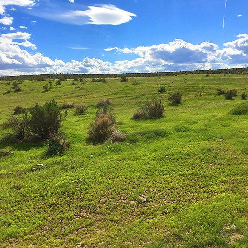 003-472-02 / 20.32 Acres in Eureka County, Nevada