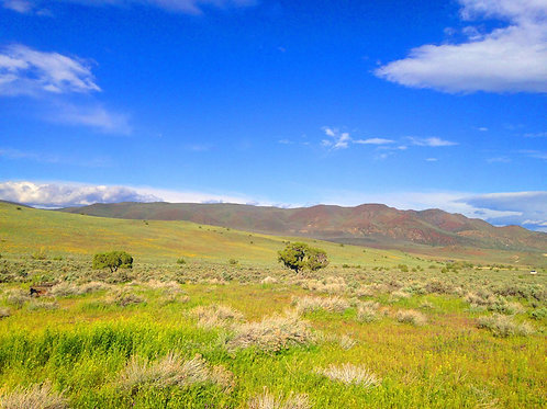 004-04A-001 / 20.00 Acres in Elko County, Nevada