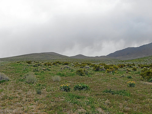 010-56H-018 / 40.00 Acres in Elko County, Nevada