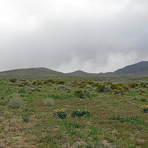 010-36K-013 / 40.00 Acres in Elko County, Nevada