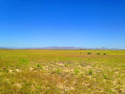 002-056-13 / 0.62 Acres in Eureka County, Nevada