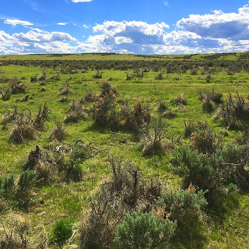 003-471-10 / 20.10 Acres in Eureka County, Nevada