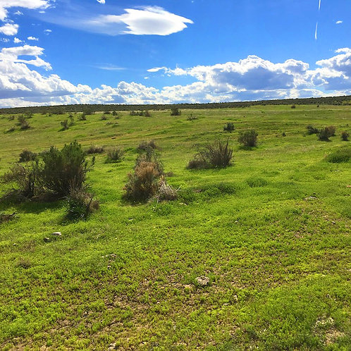003-471-11 / 20.10 Acres in Eureka County, Nevada