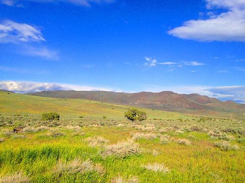 004-730-004 / 40.00 Acres in Elko County, Nevada