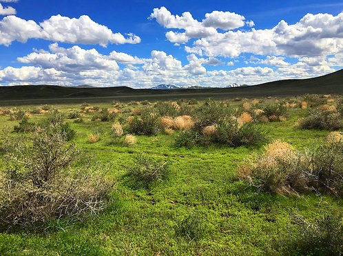 003-452-02 / 10.00 Acres in Eureka County, Nevada