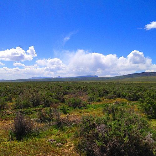 07-0308-09 / 39.92 Acres in Humboldt County, Nevada