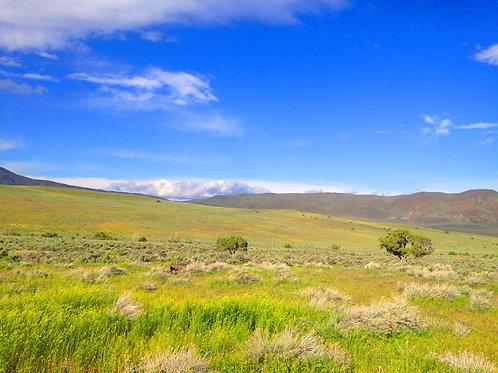 072-001-009 / 4.77 Acres in Elko County, Nevada