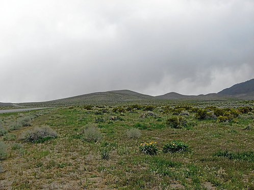 010-37A-021 / 40.00 Acres in Elko County, Nevada